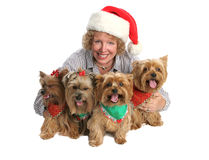 Christmas Yorkie Family Portrait. A woman posing for a Christmas portrait with her four yorkie dogs.  Isolated  with focus on woman's face Stock Images