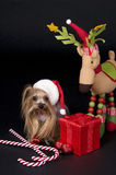 Christmas Yorkshire terrier dog. Little Yorkshire terrier dog dressed up for christmas Royalty Free Stock Image