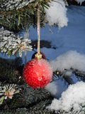 Christmasball. In christmastree outside in winter Royalty Free Stock Photos