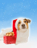 Christmaspostcard with funny santa dog, gift. Christmas postcard with funny dog as santa, gift box, snow against light blue background Stock Photos