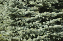 christmass σύσταση Στοκ φωτογραφία με δικαίωμα ελεύθερης χρήσης