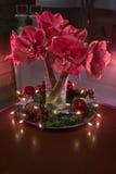 Christmass-Blumen Stockbilder