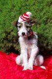Christmass hund fotografering för bildbyråer