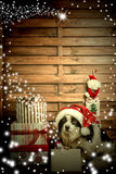 Christmastime greeting card puppy Royalty Free Stock Photography