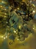 Christmastree Lappland Lizenzfreie Stockbilder