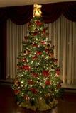 christmes结构树 库存图片