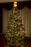 Christmes Tree Stock Images