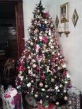 Christmss drzewo Zdjęcie Royalty Free