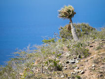 Christoffel Nationaal park - plam bomen Royalty-vrije Stock Fotografie