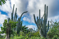 Christoffel National park - Curacao Views. Cactus   Christoffel National park   - Views around Curacao a small Caribbean Island Stock Images