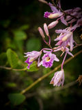 Christoffel National park - orchid Royalty Free Stock Photo