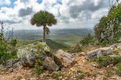 Christoffel National park palm tree views to the sea Stock Image