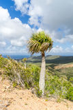 Christoffel National park palm tree views to the sea Royalty Free Stock Photography