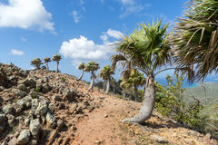 Christoffel National park palm tree views to the sea Stock Photo