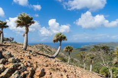 Christoffel National park palm trees. Christoffel National park -Views around Curacao a small island in the Caribbean Royalty Free Stock Photo