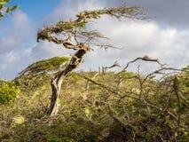 Christoffel National park - trees Royalty Free Stock Photo