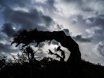 Christoffel National park - trees Stock Image