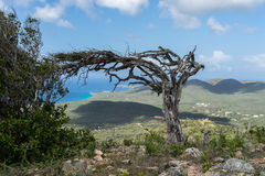 Christoffel National park trees. Christoffel National park -Views around Curacao a small island in the Caribbean Royalty Free Stock Photo