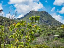 Christoffelberg mountain Christoffel National Park Curacao Views. Christoffel National Park  Views around the small Caribbean island of Curacao Stock Photography
