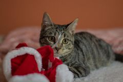 Chritsmas hat and Kitty royalty free stock photos