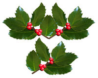 Chritsmas Holly isolated on white background Stock Photos