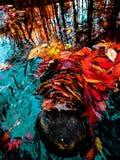Chrom woda zdjęcie royalty free