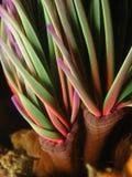 Chromatic anemone Stock Image
