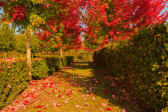 Chromatic magic of the autumn Stock Images