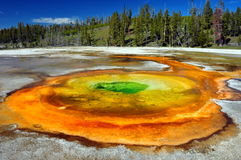 Chromatic Spring. Yellowstone National Park Royalty Free Stock Photo