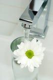 chrome вода из крана цветка Стоковое Изображение