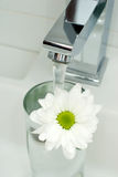 Chrome Tap Water And Flower Stock Image