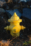 Chrome Yellow Fire Hydrant Royalty Free Stock Photo