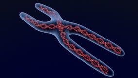 Chromosom X 3d übertragen Lizenzfreies Stockbild