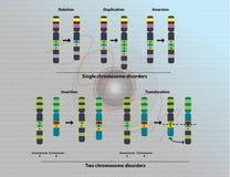 Chromosomal abnormiteter Fotografering för Bildbyråer