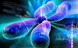 Chromosome. Digital illustration  of chromosome in   colour background Royalty Free Stock Photos