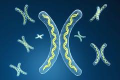 Chromosome Stock Photos