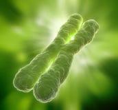 Chromosome. A human chromosome - scientific illustration royalty free stock photography