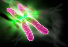Chromosome Stock Photos