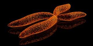 Chromosome. 3d render illustration of chromosome Royalty Free Stock Photos