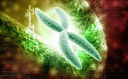 Chromosome vector illustration