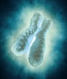chromosome ilustração do vetor