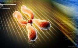 chromosome ilustração stock