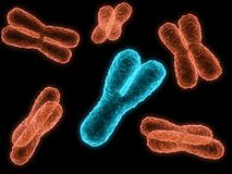 Chromosome Royalty Free Stock Photography
