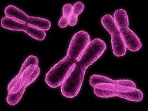 Chromosome. 3d rendered close up of some isolated chromosome Stock Image
