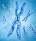 Chromosome X, brins d'ADN Photo stock