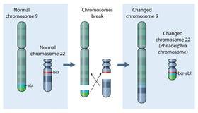Chromosome de Philadelphie illustration libre de droits