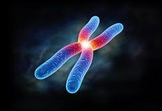 Chromosome. Digital illustration of chromosome in colour background royalty free stock image