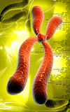 Chromosome. Digital illustration  of chromosome in   colour background Royalty Free Stock Image