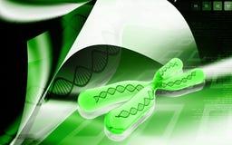 Chromosome Royalty Free Stock Photos