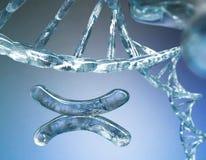 Chromosome, DNA. Scientific background, beautiful blur stock photos